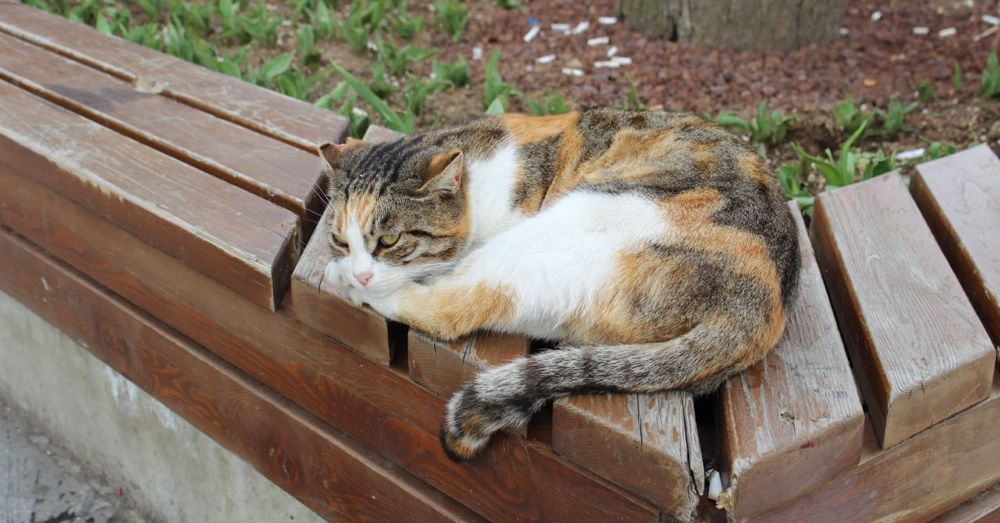 Istanbul cat on a bench.