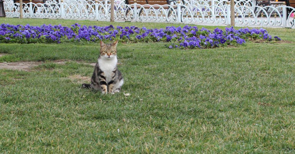 Istanbul cat in Sultanahmet Square.