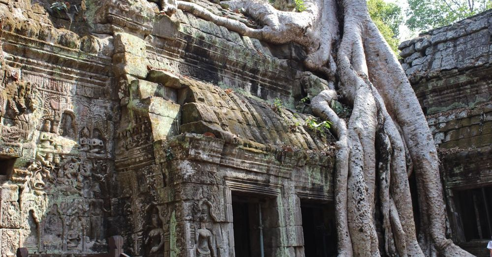 Ta Prohm Icon II