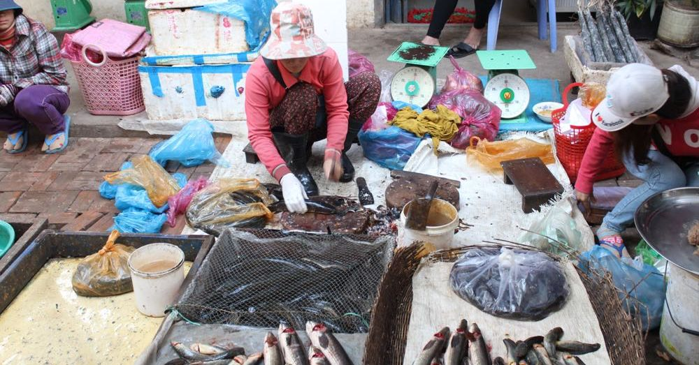 Market: Fish Lady
