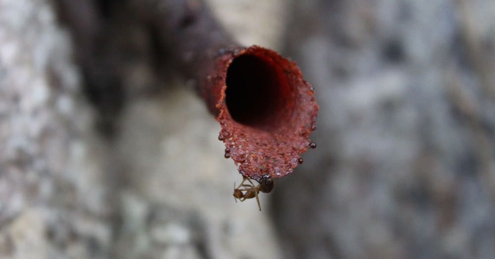 Stingless Bee Tube