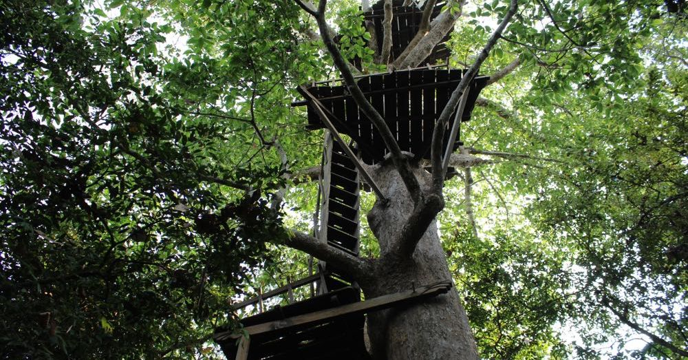 Treehouse in a Cambodia Forest
