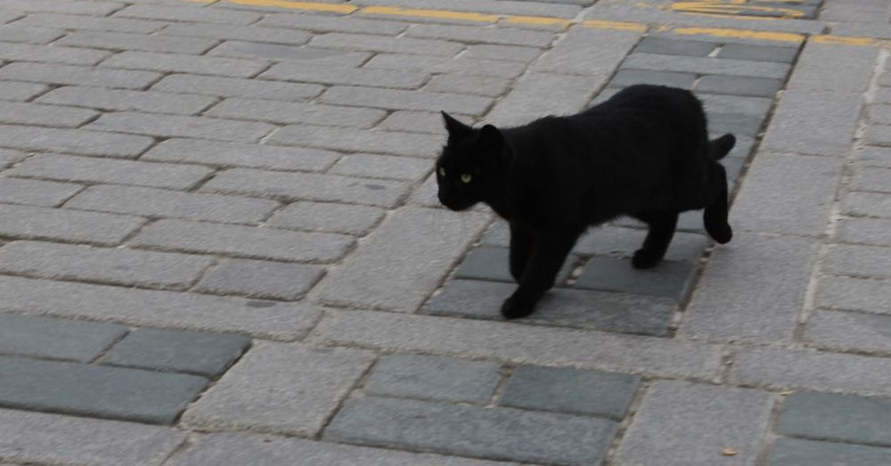 Black Cat on the Square