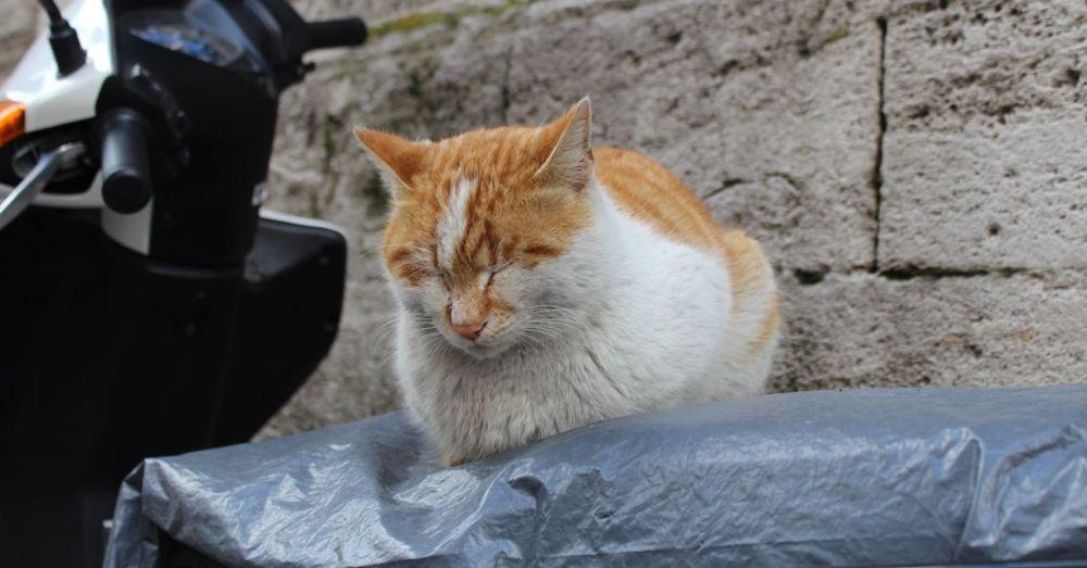 Motorbike Cat