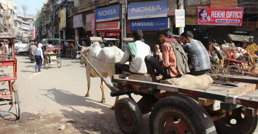 Working Cows, Old Delhi