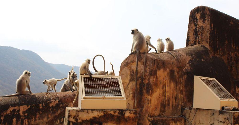 Monkeys!