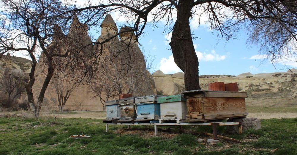 Beekeeping in Cappadocia