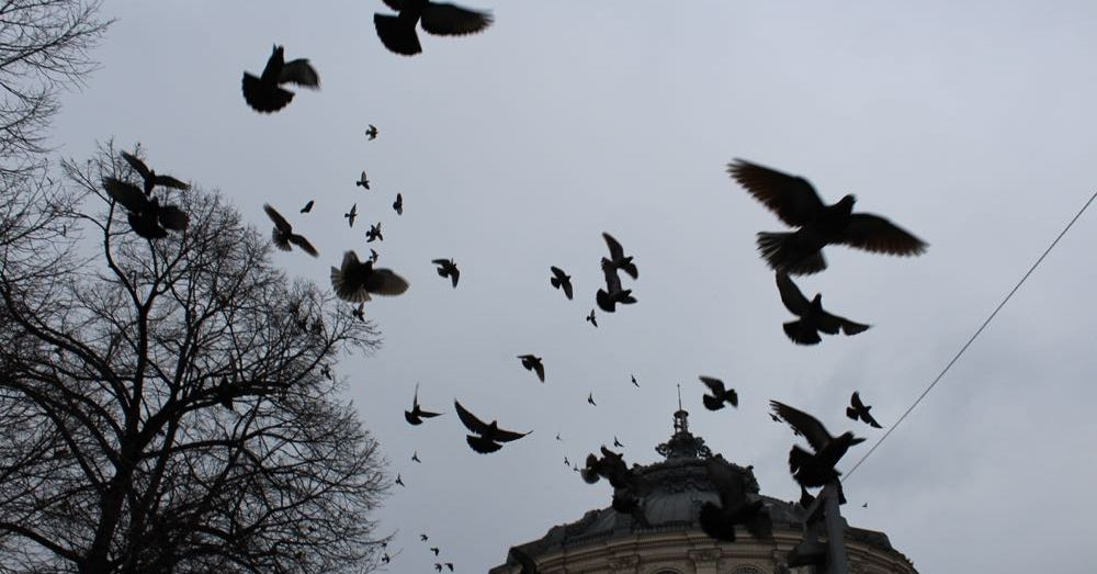 Birds like the Romanian Athenaeum