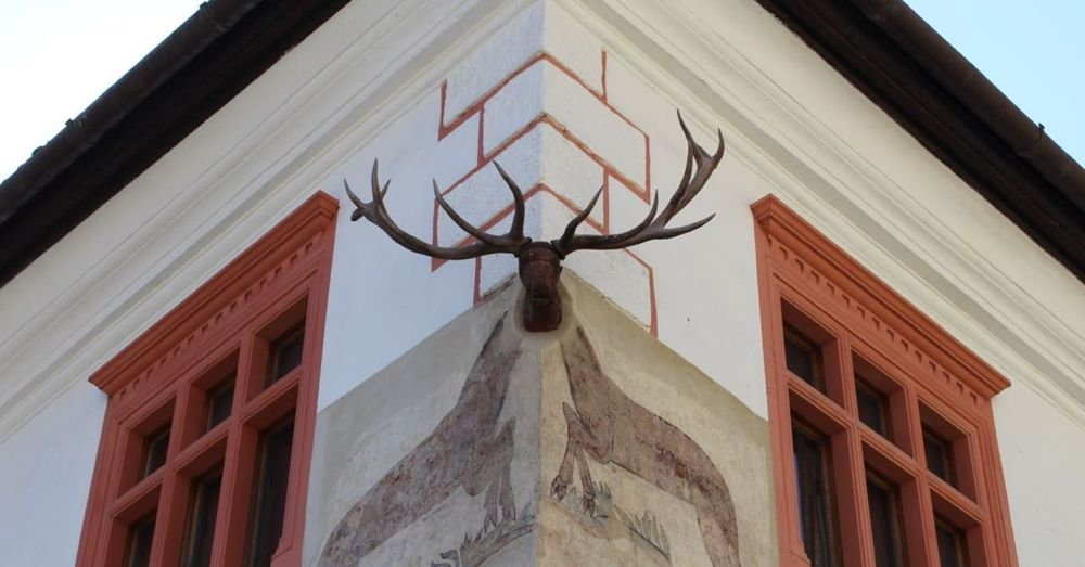 Stag House, Sighisoara