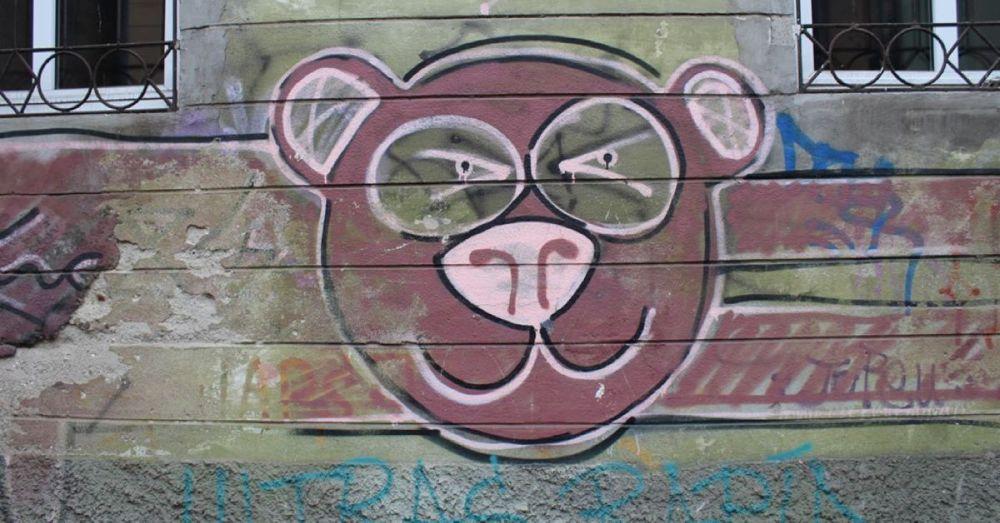 A Bear in Brasov