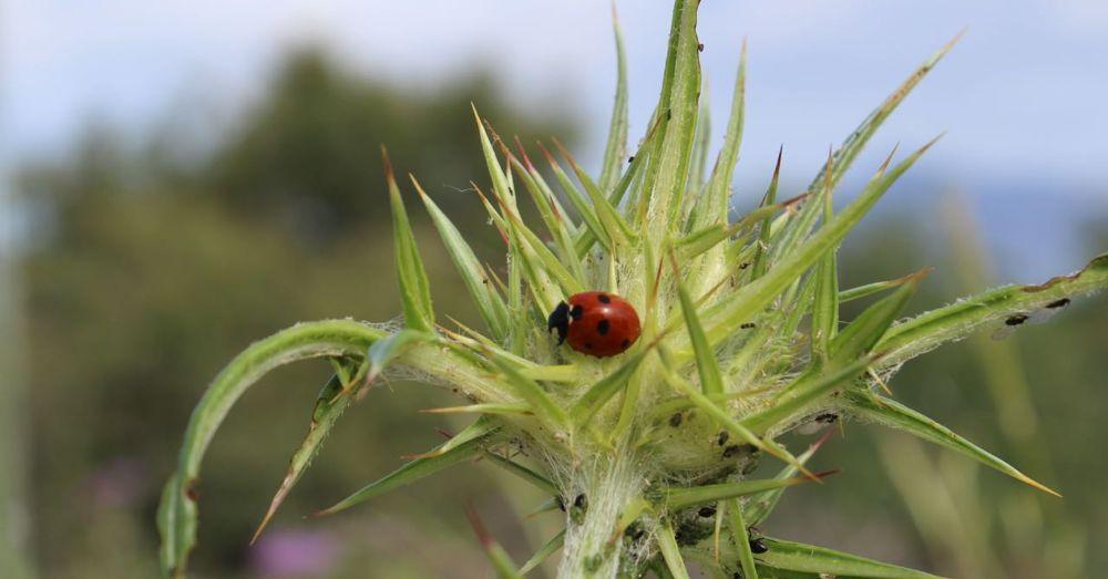 Ladybug on Crete