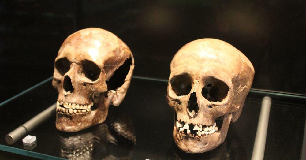 Skulls. Found in a bog.