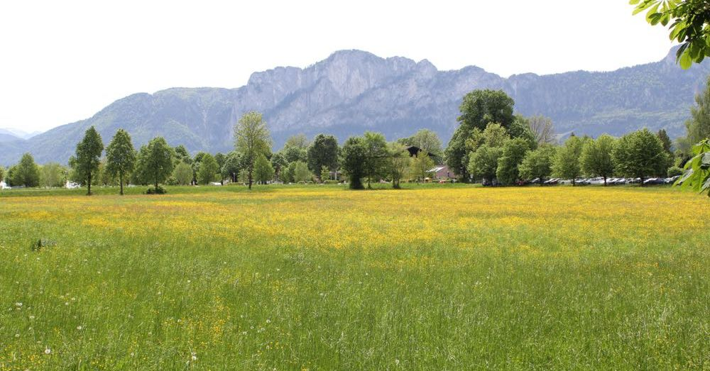 A field in Mondsee