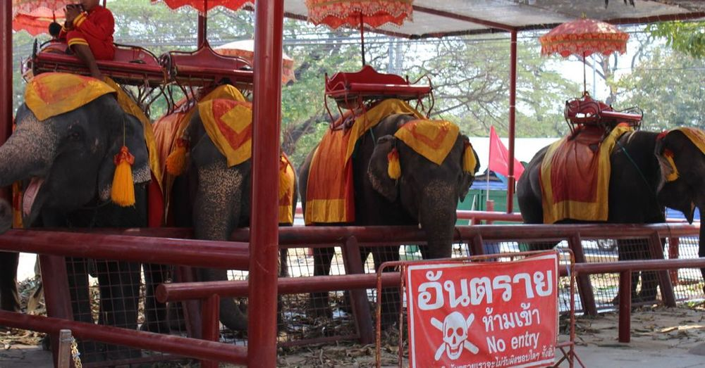 Elephant riding stand in Thailand