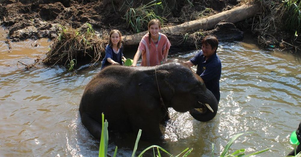 Bathing a baby elephant at Ran-Tong Elephant Center