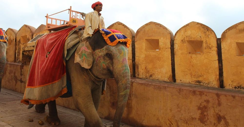 An elephant at the Amer Fort in India