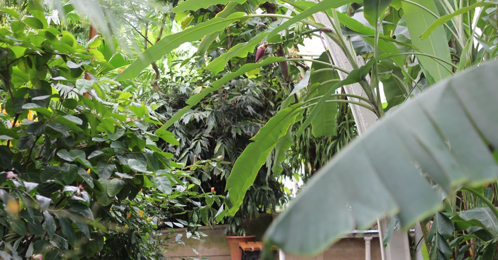 It's a jungle inside the Palm House.