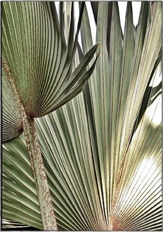 fan-palm.jpg