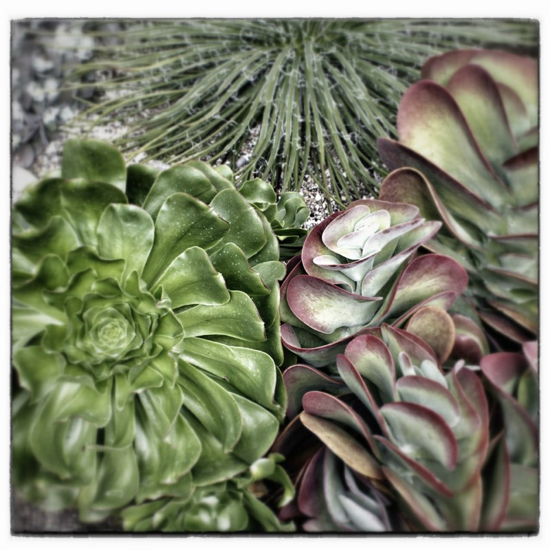 succulents-square.jpg