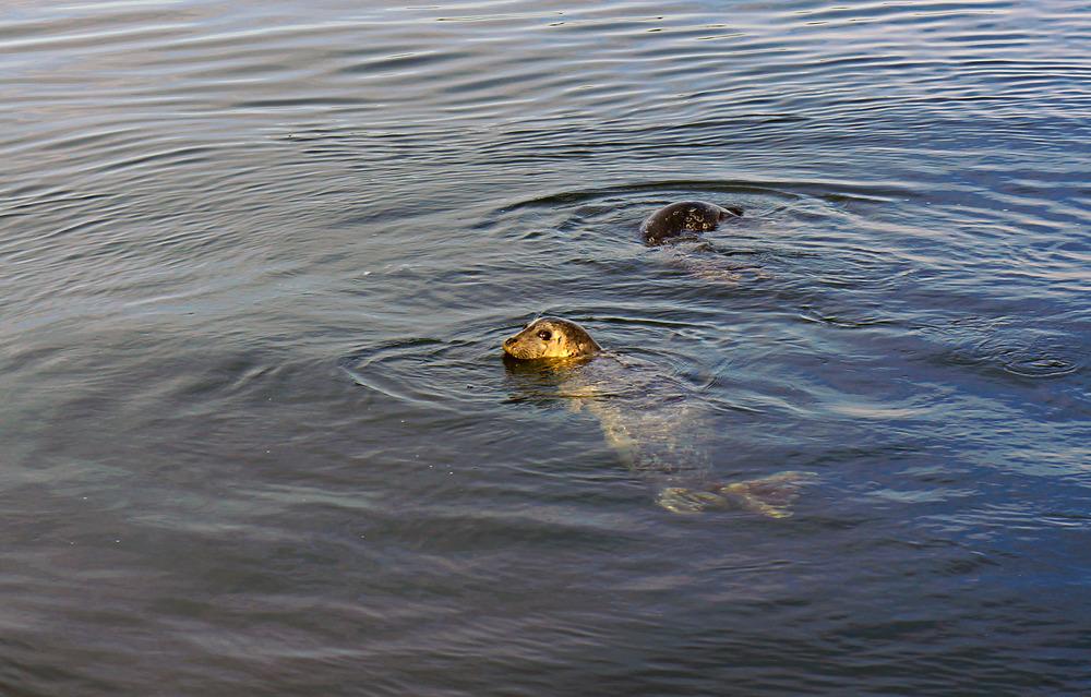 IOA_Burgard_Orcas_Seals.jpg