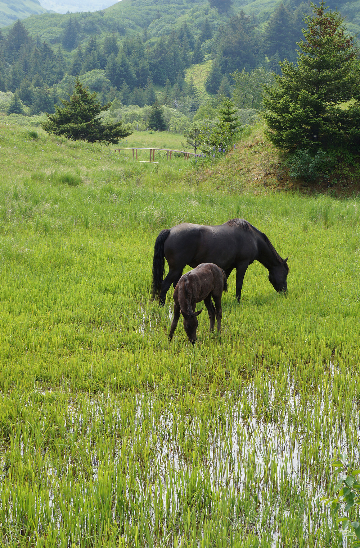 IOA_KI_Horses_Pony.jpg