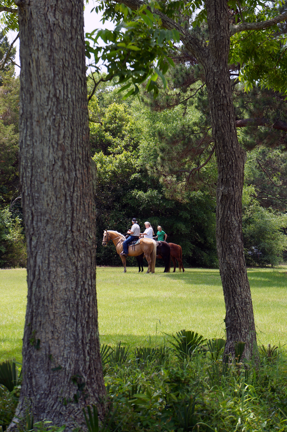 IOA_Edisto_Horseback.jpg