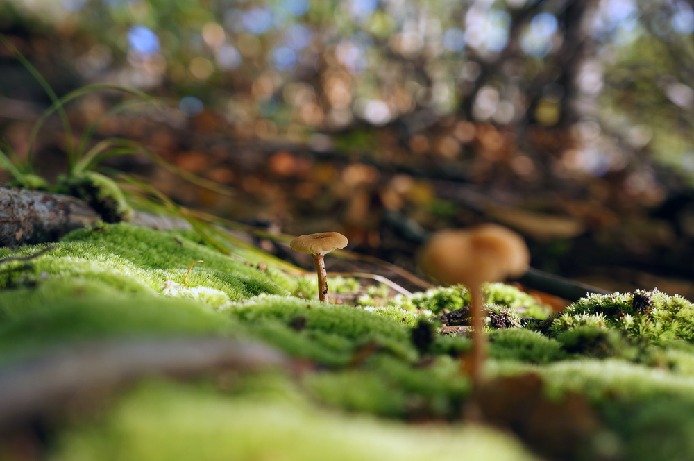 IOA_Petra_Moss_Mushrooms.jpg