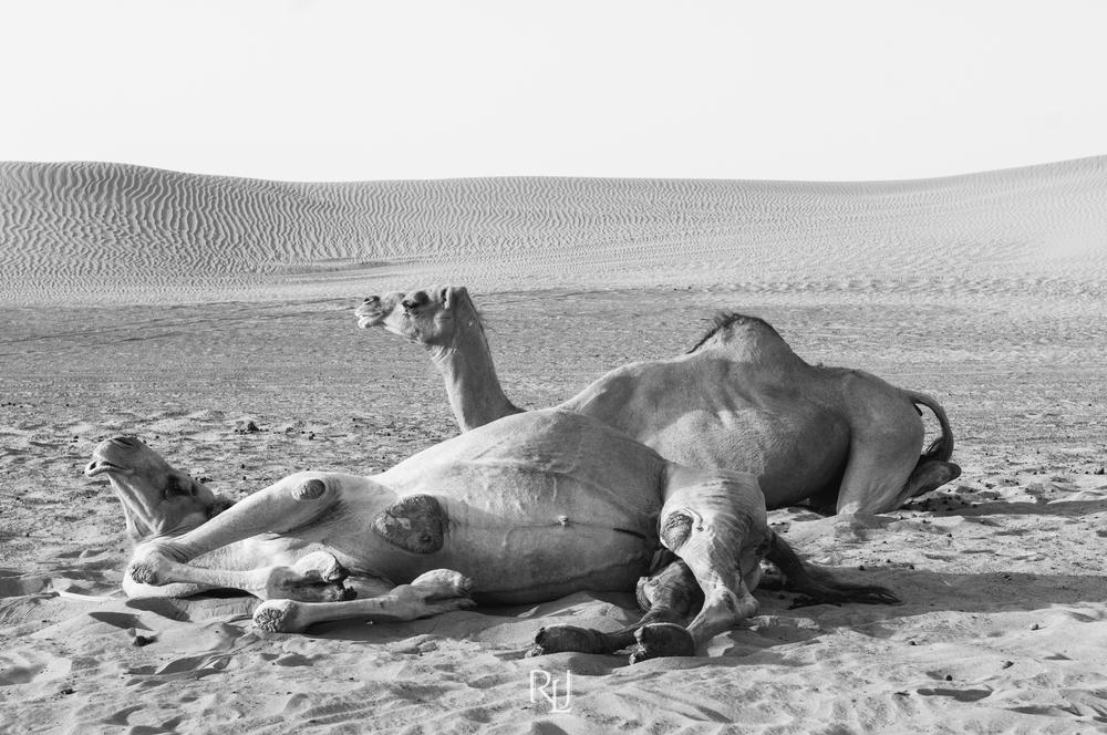 UAE15-03.jpg