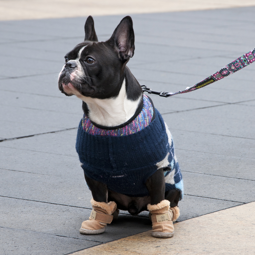 This little guy was sporting a Pup Crew sweater and some fabulous boots (brand unknown)