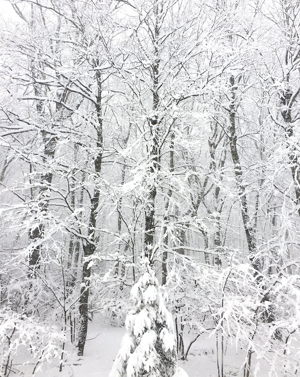 amy_chen_design_blog_winter_white_woods.jpeg