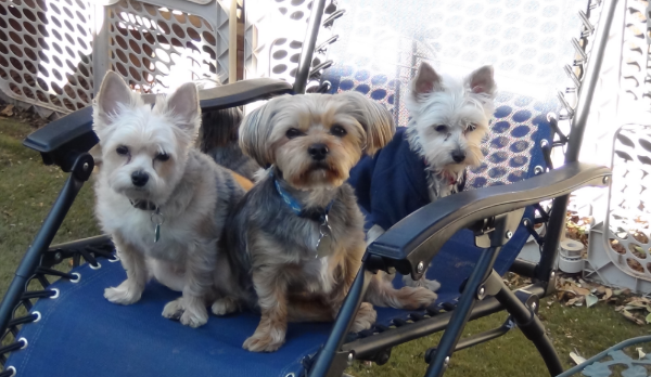 Wilson, Beau and Tuli