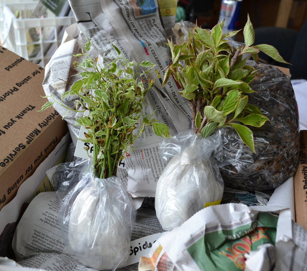 Plants ready to be shipped.