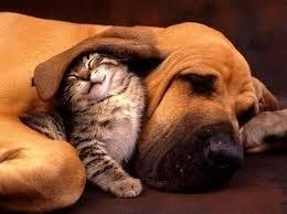 kitty-puppy cuddles.jpeg