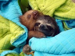 sloth-snuggles.jpeg