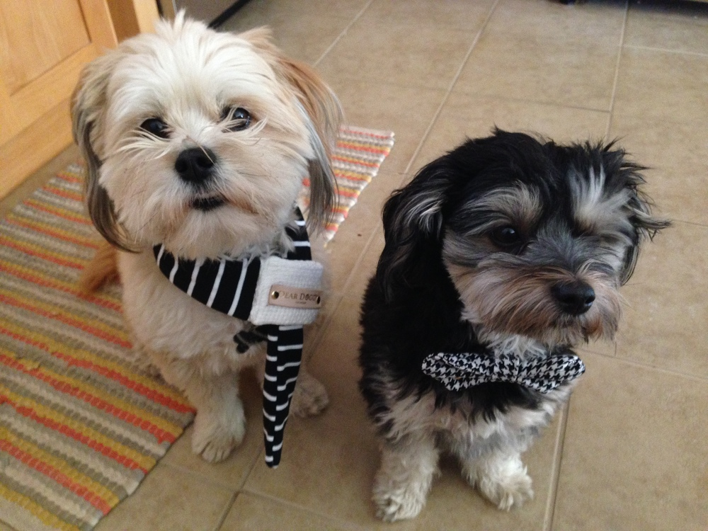 our cutest staff members modeling dear doggy products