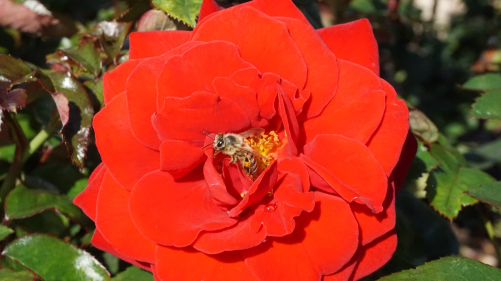 I was taking photos of a flower when a bee photobombed the shoot haha.