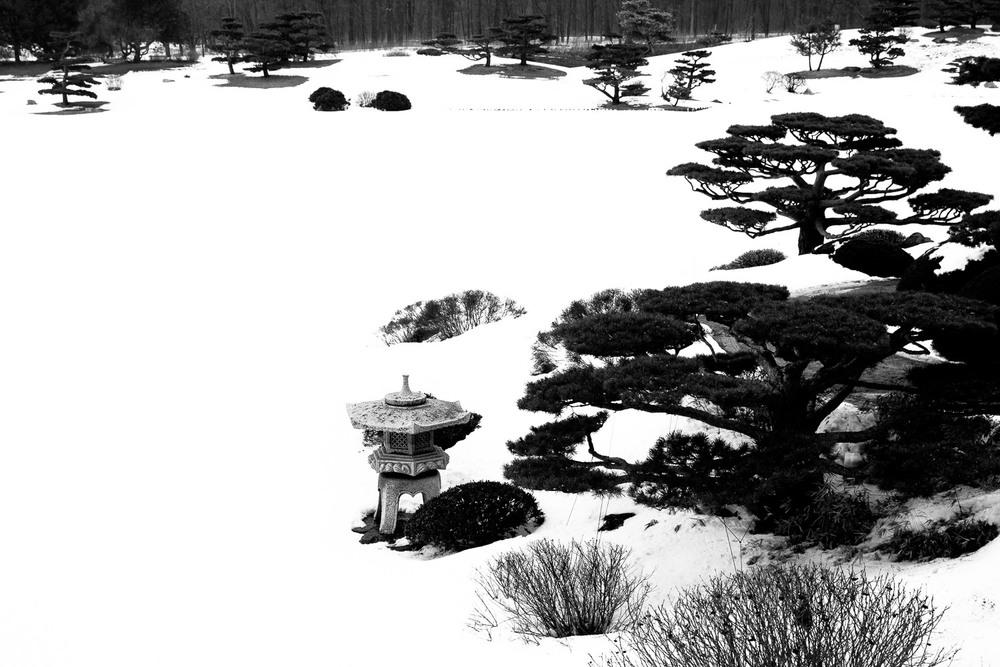 Japanese Winter Garden