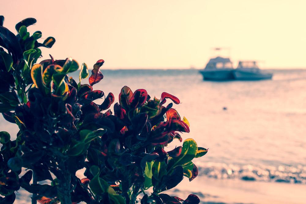 Aruba Dusk