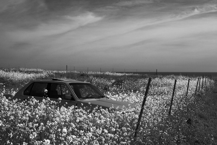 a car in a field of flowers.jpg