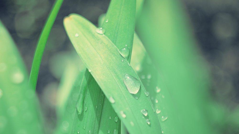 Brume matinale sur une plante herbacée