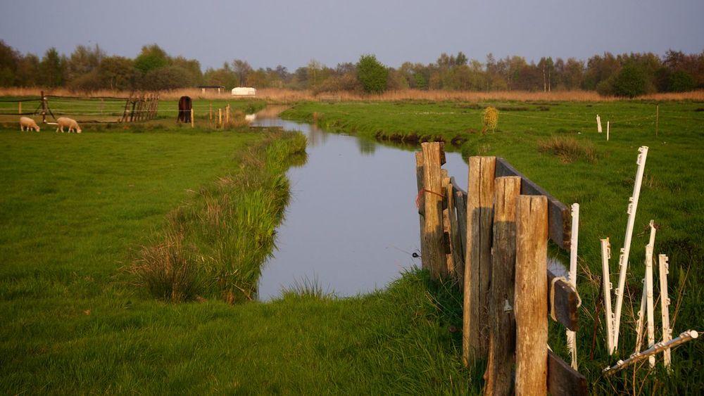 Friesland 7.jpg
