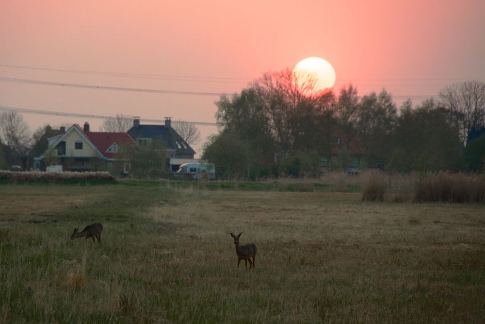 Friesland 4.jpg