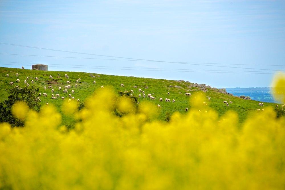 Spring Canola (8).jpg