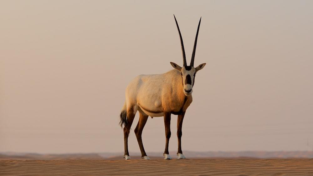Dubai Desert (8).jpg