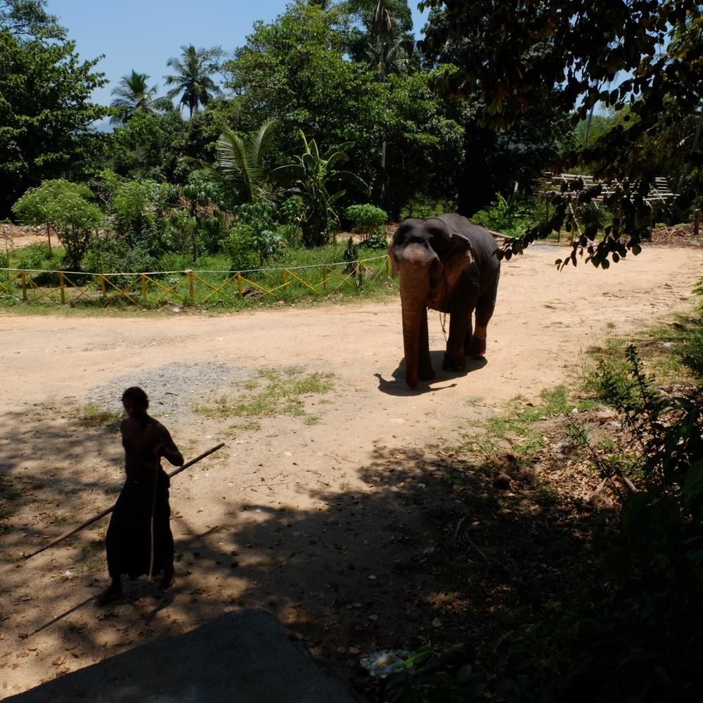 sad elephant.....