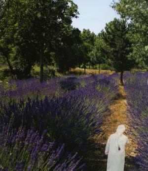 Lavender fields. 2014