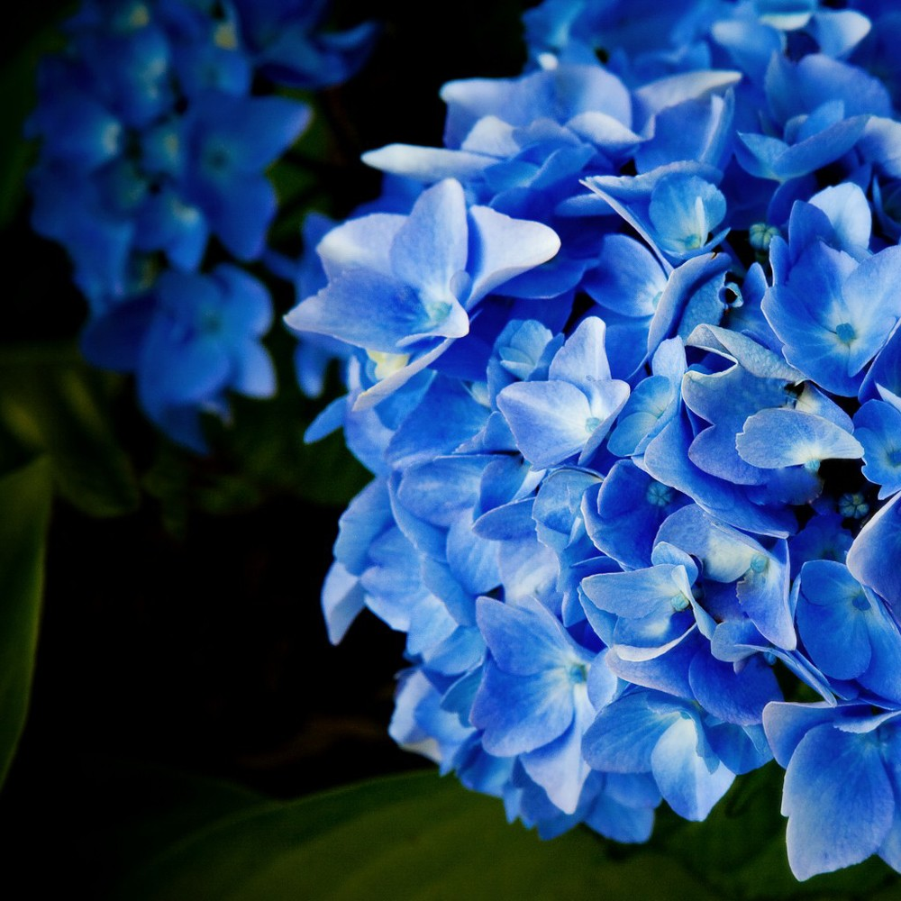 bowering blue-047 1024x1024.jpg