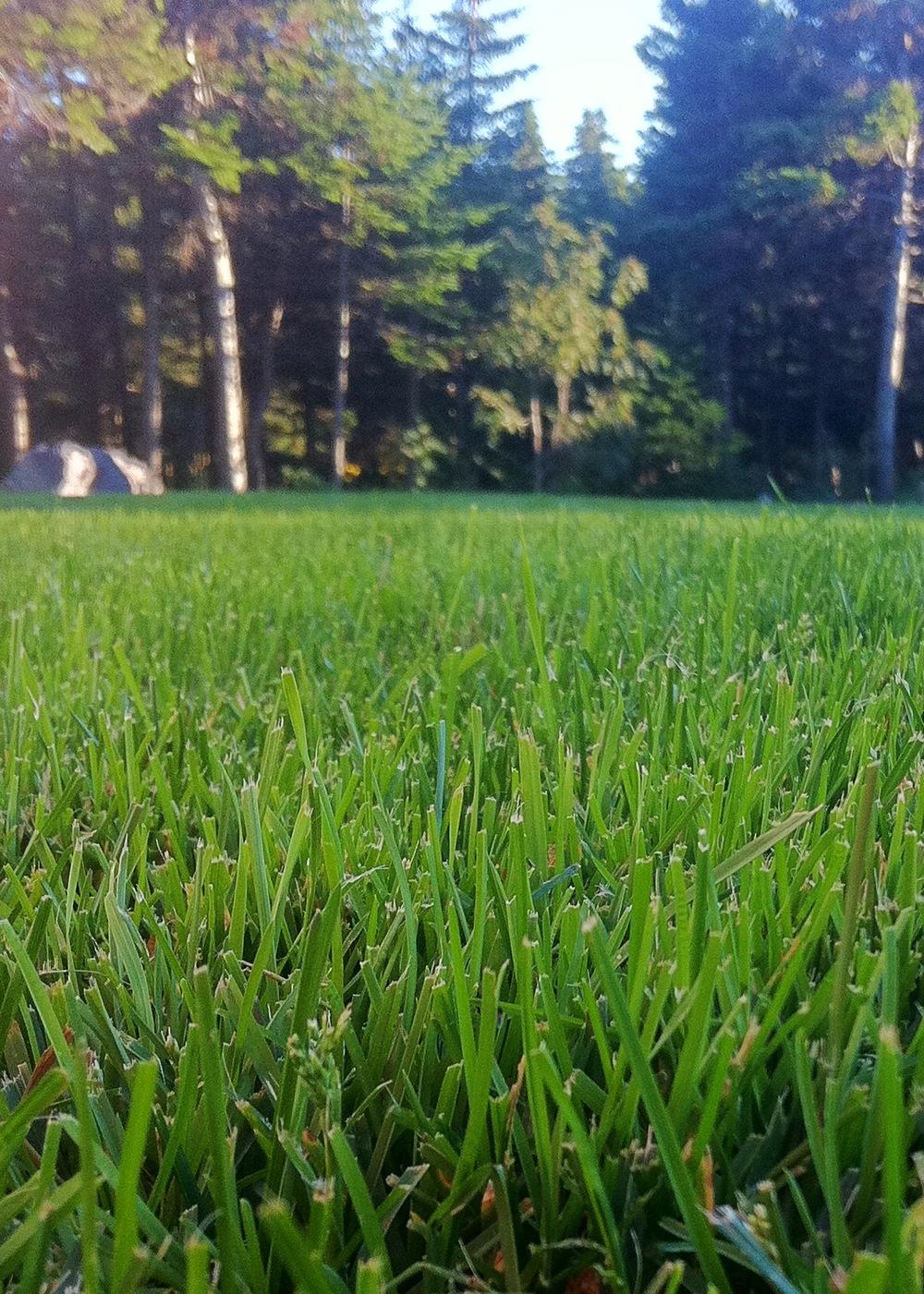 lawn closeup.jpg