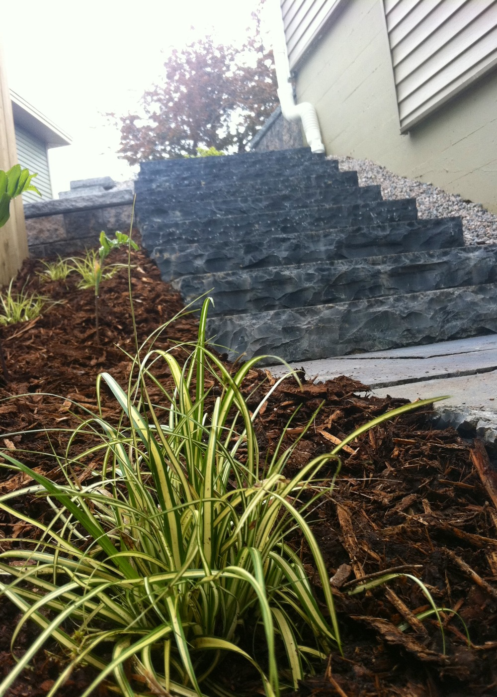 steps and grass.jpg