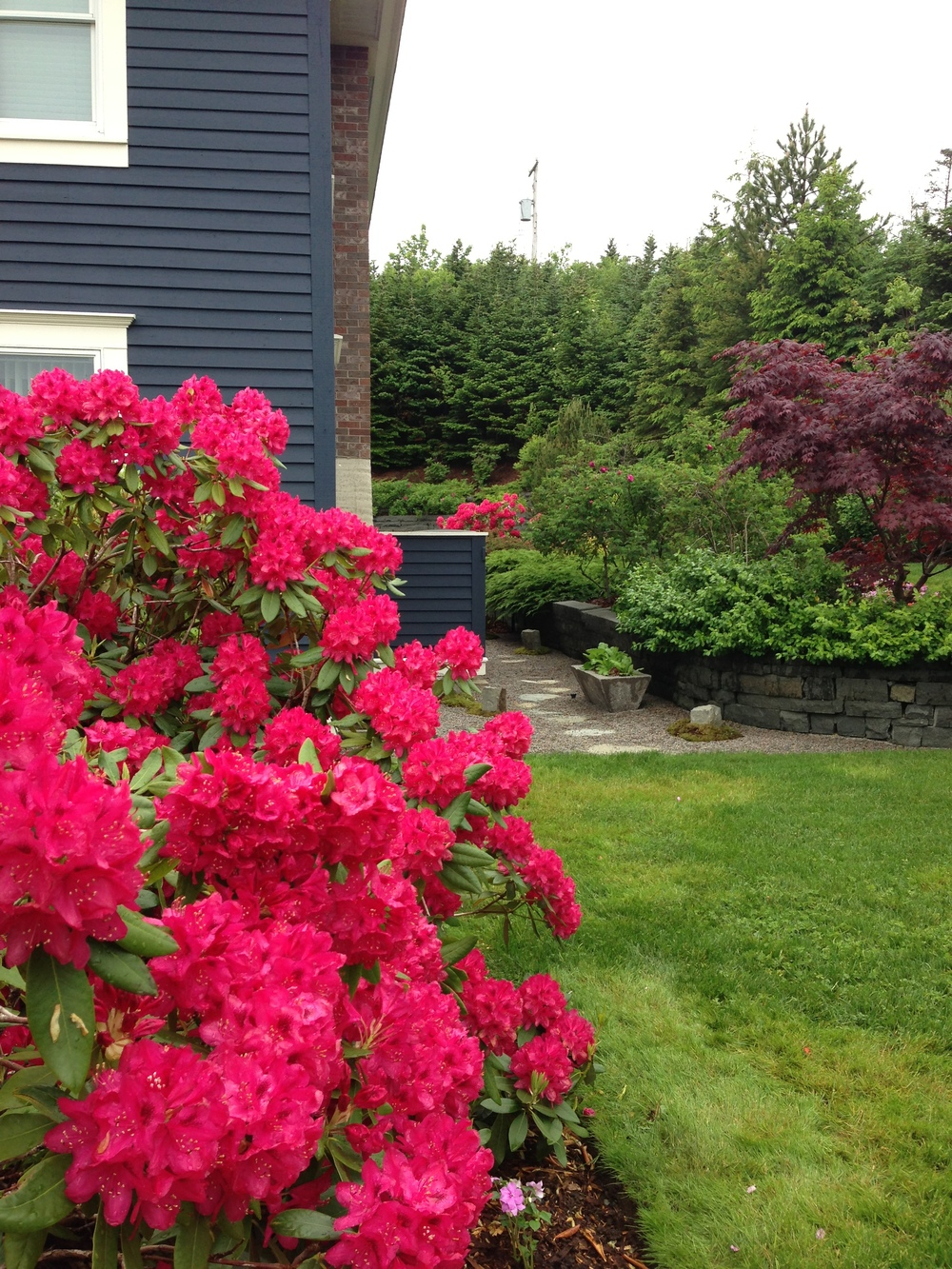 Front Side Garden  leading to Utility Area.jpg